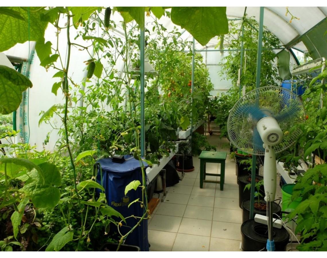 Гидропоника и помидоры