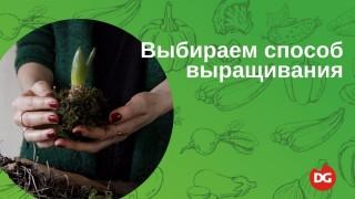 Как выбрать способ выращивания растений